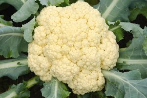 There are cauliflower shortages across the UK