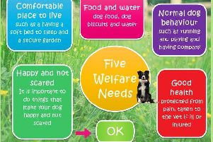 Computer game designed by Scottish SPCA and University of Edinburgh aims to teach primary pupils how to care for animals.