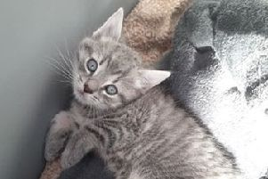 Two of these kittens have been stolen from Lothian Cat Rescue