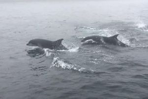 This incredible footage shows a friendly pod of dolphins putting on a spectacle for passengers on-board a boat in the Forth. Picture: Seafari