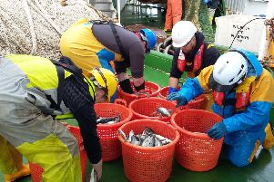 Mackerel and herring fishermen have been engaged in a number of scientific initiatives