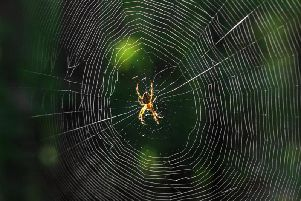 These methods help keep spiders away from the home.