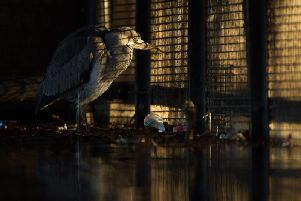 Behind Bars (grey heron) by Daniel Trim from from Hitchin, Hertfordshire, which came first in the Urban wildlife category and was named as the overall winner in this year's British Wildlife Photography Awards. PIcture: PA