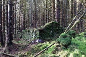 The ruined farmstead buildings at Wee Brucach Caoruinn in Loch Ard forest, which archaeologists believe may have been at the heart of an industrial scale illegal whisky making operation. PIC: Contributed.