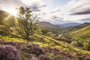 Hundreds of native trees are set to be planted at a living laboratory in the Scottish Highlands next month.
