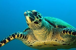 The report warns of the dangers posed to marine life by 'ghost' fishing gear. Picture: Thinkstock