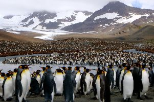 South Georgia is home to penguins and a host of other rare and unique wildlife