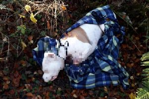 The dog's body was found in woodland to the south of Edinburgh. Pic: Scottish SPCA