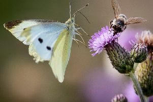 Call for urgent action to protect insect species.