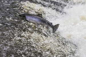 People are being warned to avoid salmon from 'unknown sources'
