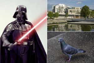 Contractorsclaim they are managing to cut the number of pigeons plaguing the Scottish Parliament by using not only hawks but also hand-held lasers to scare them away.
