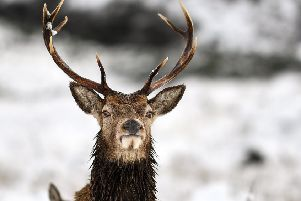 A report has found culling deer would cut tick numbers and reduce environmental damage and improve the animals' health. Picture: Getty