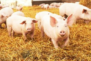 Animal Farm and other works by George Orwell still resonate powerfully today (Picture: Getty Images/iStockphoto)