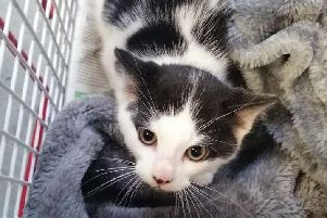 The tiny kitten was dumped at the side of the road in Shotts picture: supplied