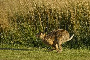 Hare coursing arrests