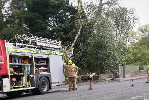 Fire fighters take care of a fallen tree at Station Road in Kelso this afternoon.