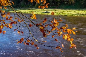 A hint of autumn beside the River Tweed near Newstead.