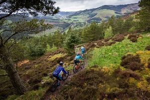 Neil Dalgleish insists trails, like this one at Thornilee, would set the Tweed valley up well for being the world's first national park for cycling.