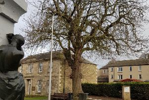 The chestnut tree outside the council buildings, across from the Mungo Park statue in Selkirk's High Street.
