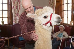 George Gillie meets Rory the alpaca
