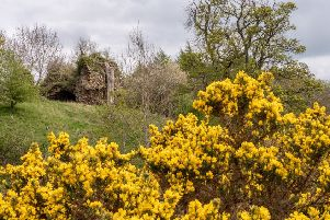 Whitslaid Tower ruins, just south of Lauder.