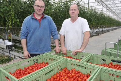 2m tomato initiative bearing fruit and set to create 20 jobs