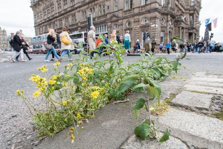 Weeds growing unchecked on Princes Street. Picture: Ian Georgeson