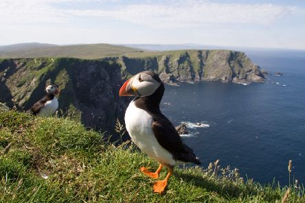 Wildlife watchers have long been drawn to Shetland - but the islands have rich pickings for those interested in history, culture, music - and fish and chips.