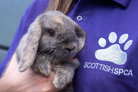 Scottish SPCA warns against buying pets for Christmas