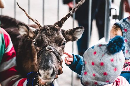 A reindeer is patted at the Paisley Christmas show