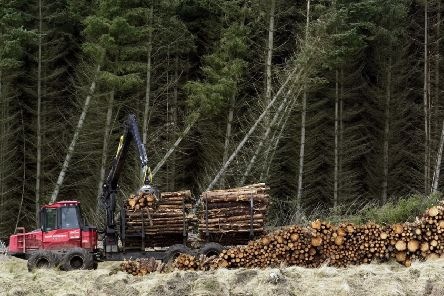 Timber harvesting in the Cloich Forest in the Borders. Picture: Neil Hanna