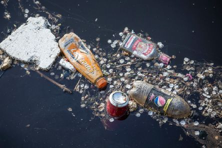 Plastic waste ' seen floating in Leith Docks ' will pollute the natural world for hundreds of years (Picture: Greenpeace)