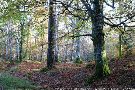 Paths for All identified several ways in which Evanton Community Woodland could be made more accessible. Picture: Julian Paren/Geograph