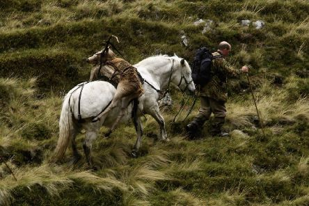 A ponyman takes a shot stag out from Milstone Cairn in Glen Callater on the Invercauld Estate. Picture: Jeff J Mitchell/Getty Images