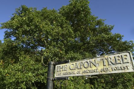 The Capon Tree near Jedburgh is the last remaining oak tree from the Jed Forest. In the future, trees will initially grow faster because of higher carbon dioxide levels in the atmosphere but are likely to absorb less of the greenhouse gas over their lifetime (Picture:  Neil Hanna)