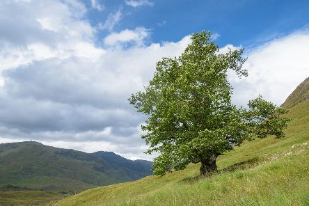 To celebrate the countrys many beautiful trees, members of the public are being asked once again to vote for their Tree of the Year for the annual Woodland Trust competition
