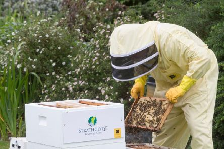 The park now has four beehives and up to 500,000 bees. Picture: JSHPIX.CO/.