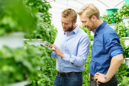 Saturn Bioponics chief executive Alex Fisher and head of R&D Arnoud Witteveen among a basil crop. Picture: Adam Gasson