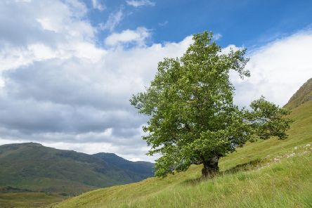 A lone elm, dubbed the Last Ent of Affric, has been voted Scotland's Tree of the Year 2019