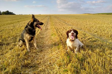 Police Scotland's canine officers love to work hard and play hard