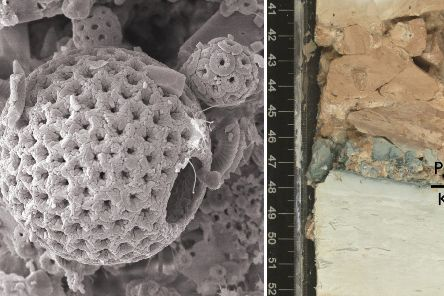 a microscopic image of one of the marine fossils examined by an international team of researchers. Picture: PA