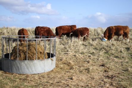 Crofting is well ahead on environmentally sustainable practices with its mainly extensive grazing system.