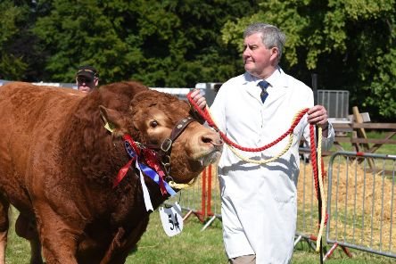 Farmer Keith Redpath parades a prize-winning limousin bull at a recent Berwickshire Show.