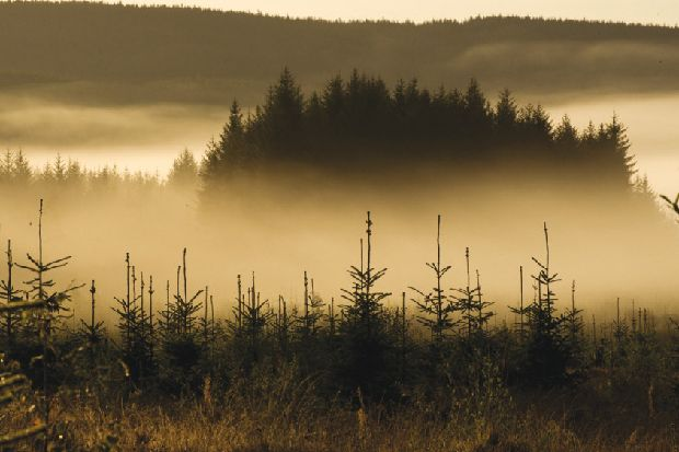 Why Scotland is planting 60,000 trees a day – Fergus Ewing