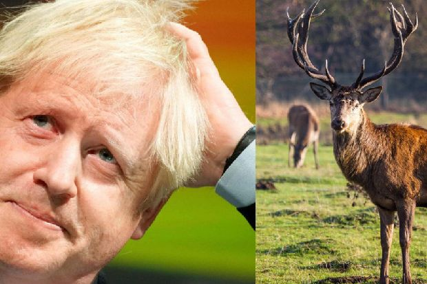 David Cameron 'shot a stag on Scots island and named it Boris'