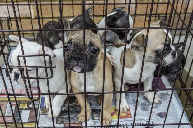 New law to BAN puppy farming in Scotland confirmed at 'historic' meeting