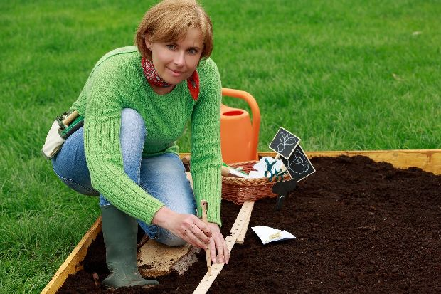 How to grow your own veggies in even a tiny garden