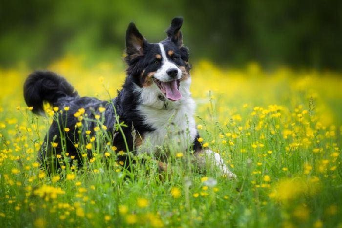 Hay fever in pets: causes, symptoms and treatment