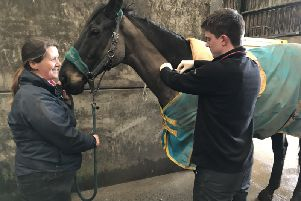 Galedin Vets vet Michael Morrison administers the equine flu vaccine to a horse, helped by practice's assistant Cheryl Elliot.
