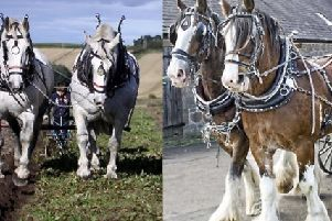 Hay Farm Heavy Horse Centre is hosting a Springtime with Heavies event.